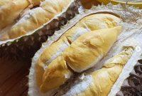 cara merawat buah durian