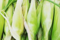 penyakit pada jagung manis