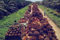penyakit yang menyerang kelapa sawit