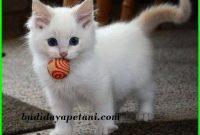 3 Aspek yang Harus Diperhatikan Dalam Merawat Kucing