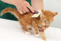 Penyebab Bulu Kucing Rontok