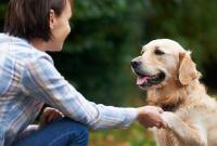 Tips Jitu dan Cara Melatih Anjing Supaya Menurut