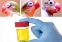Air Seni untuk Kesehatan Burung