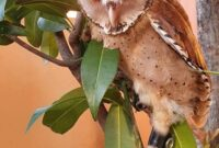 Mengatasi Burung Hantu Mogok Makan