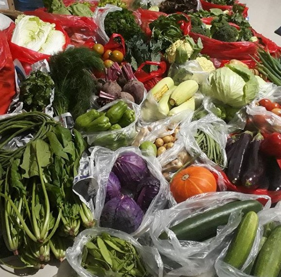 jenis Tanaman Sayur