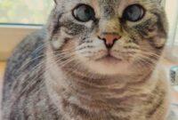 cara menggemukkan kucing